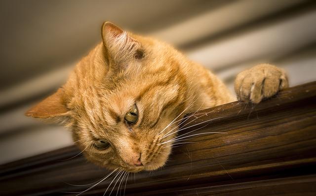kočka s drápky
