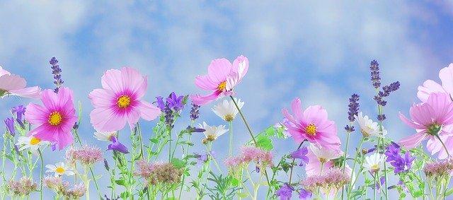 divoké květy.jpg